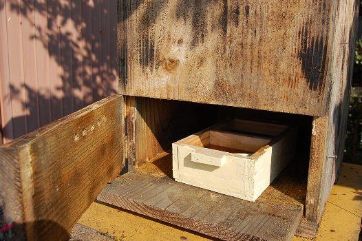 002-35日本蜜蜂の給餌.JPG