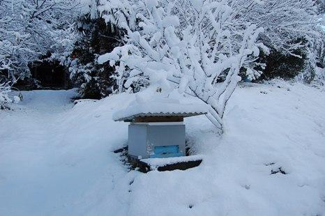 005雪の中巣箱.JPG