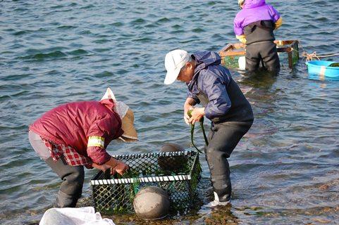 012青海苔洗い.JPG