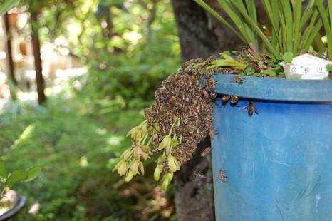013収容後、残った蜜蜂.JPG