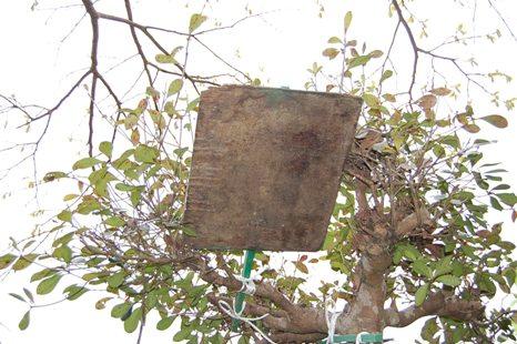 分蜂群収容板(和蜂)019.JPG