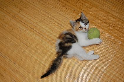 子猫DSC_0012.JPG