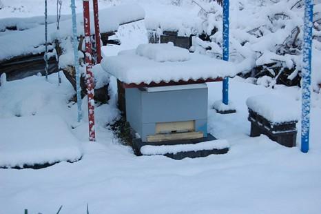 巣箱と雪.JPG