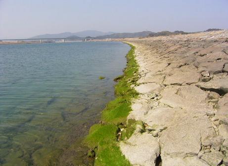 RIMG8553川岸(上流方向).JPG